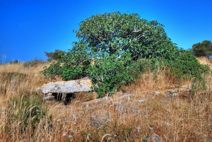 Fikentre i Israel i Migdal Malcha utsprunget Fig_tree_Israel_Biblewalks