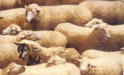 Ulv i saueham Ulv i fåreklær Falske profeter og villfarelse i endetiden